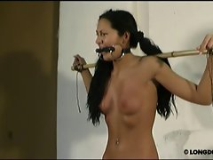 Breast whipping and painful bullwhipping with gagged Isabell